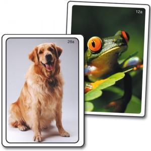 Imagiers d'animaux