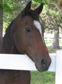 Apprendre au contact des chevaux