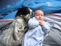 Relation handicap Animal