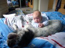 Les relations entre les personnes handicapés et les animaux
