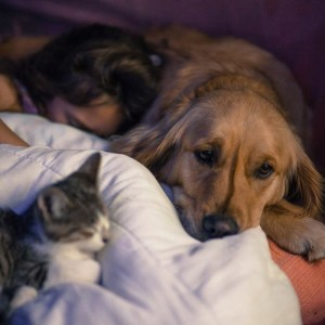 chien d'éveil et chat