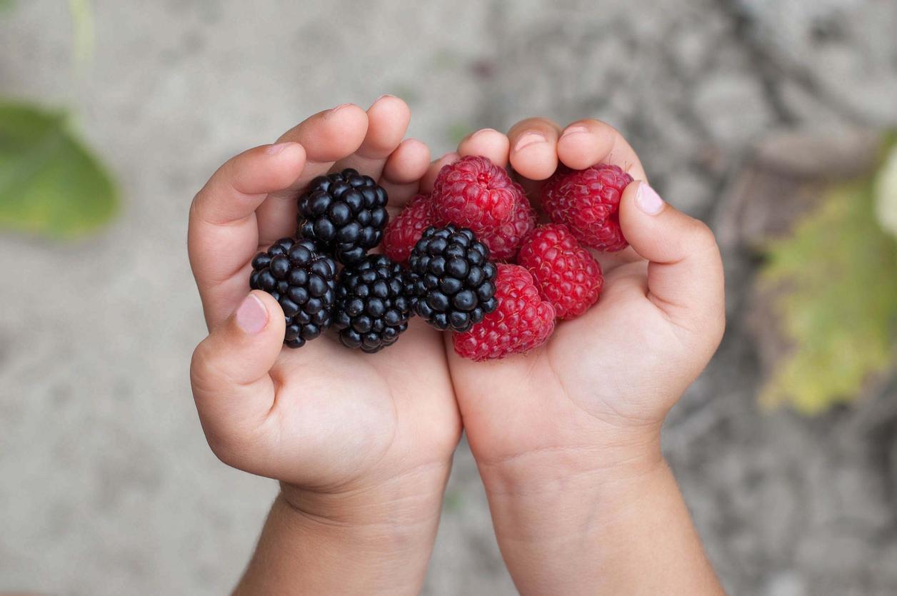 La DME, diversification alimentaire menée par l'enfant