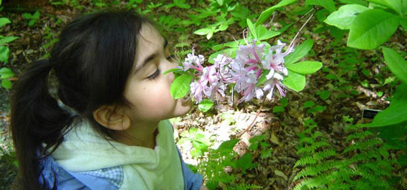 plantas aromaticas en el jardin sensorial