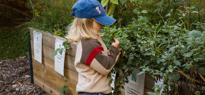 plantas a la altura de los niños