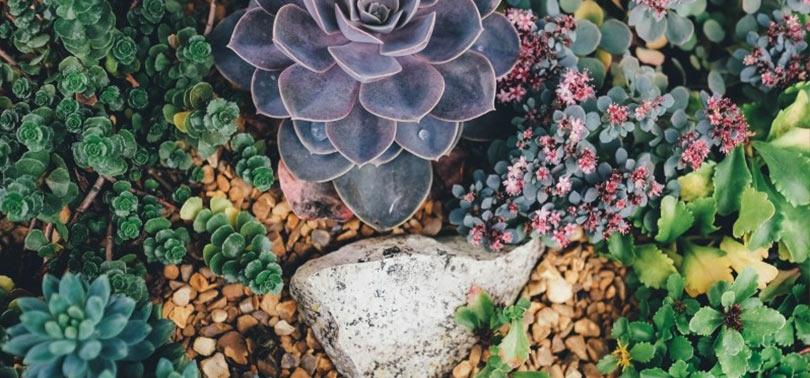 flores y plantas de un jardin sensorias