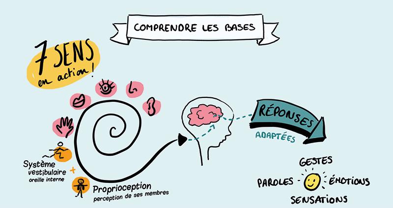 L'intégration neuro sensorielle expliquée en facilitation graphique