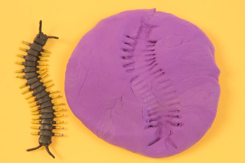 Empreinte et insecte : activité pendant le confinement