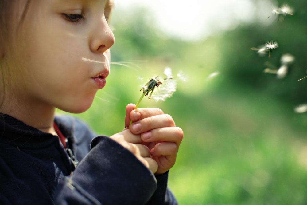 Une enfant souffle sur une fleur.
