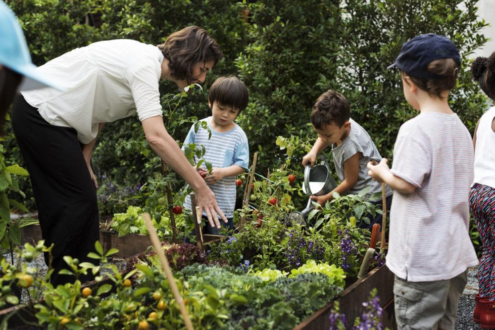 Des enfants entretiennent un potager dehors
