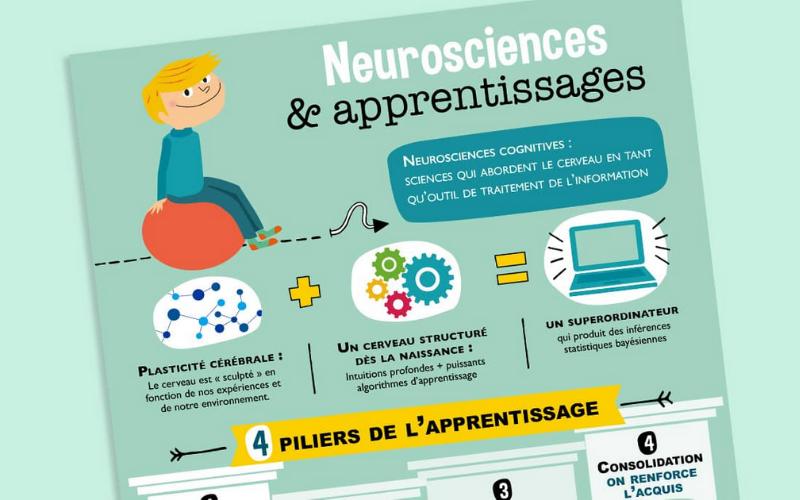 Infographie sur les neurosciences pour la salle de classe