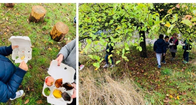 faire classe dehors et collecter des feuilles d'arbres