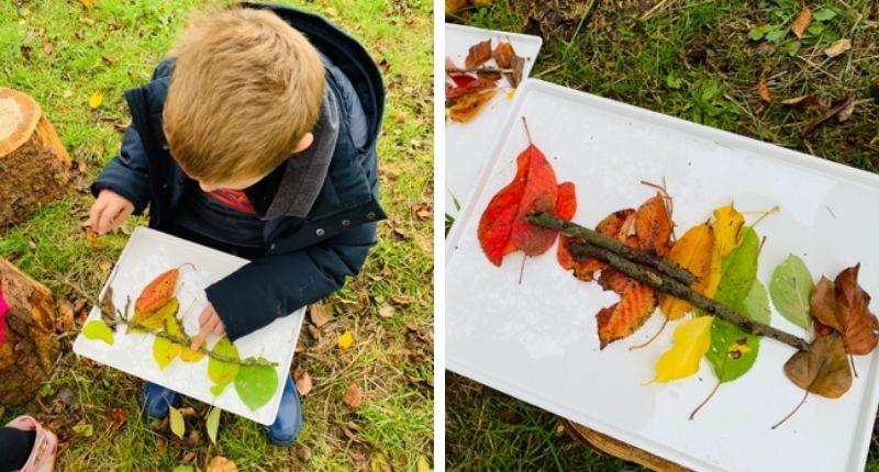 Dégradé de feuilles sur le plateau