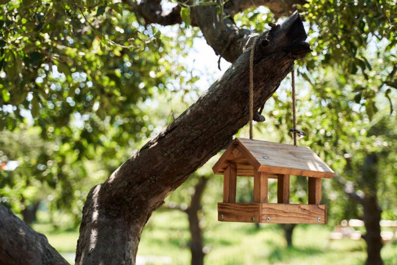 Cabane à oiseaux nichoir