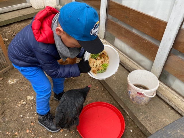 Pédagogie de projet : un enfant nourrit les poules à l'école