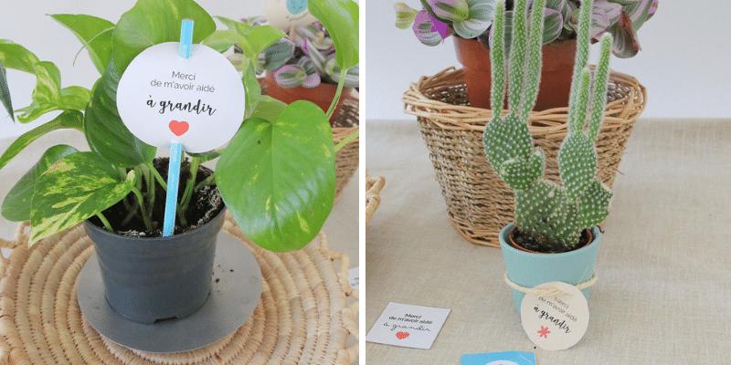 Des idées cadeaux : Des cartes de gratitude à planter